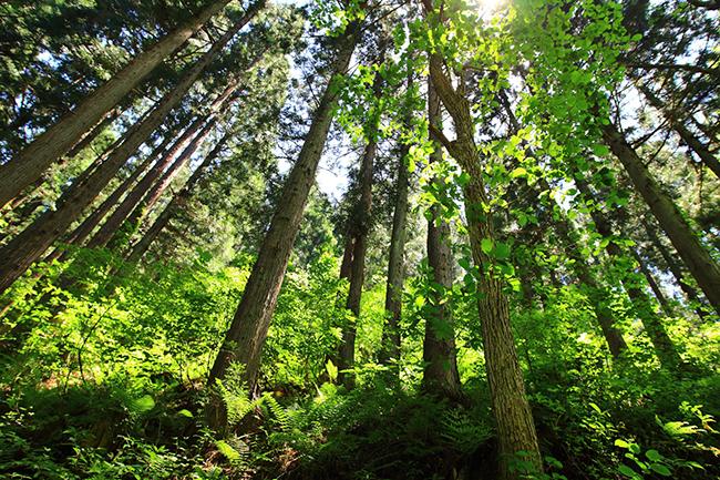 自社森林イメージ
